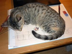 Zeichnenunterbrechung aufgrund von Katze